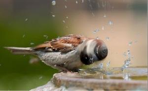 bird-bath1